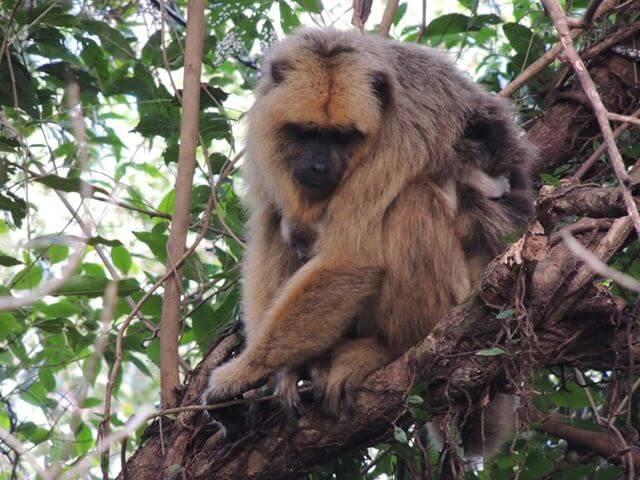 Animals at Irupe Lodge