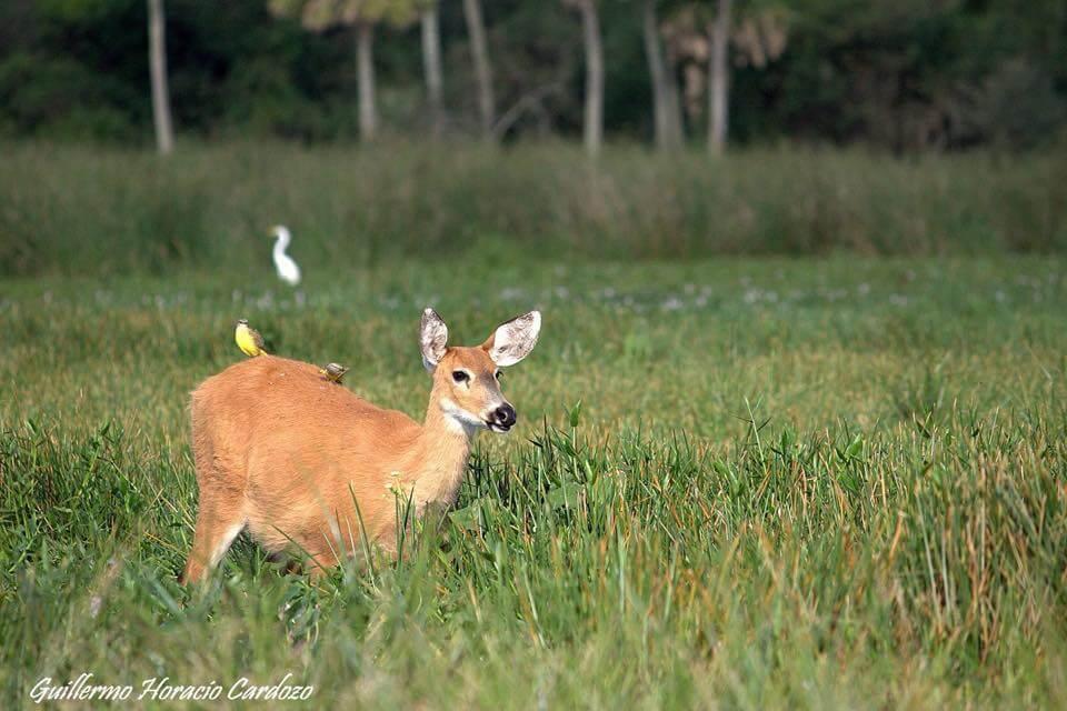 Deer at Posada Tupasy